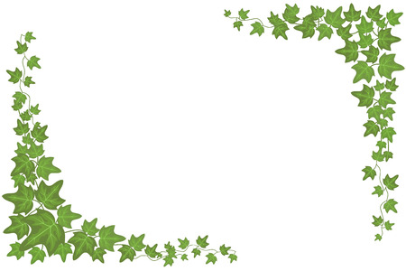 Decorative green ivy wall climbing plant vector frame Çizim