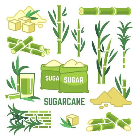 Colture agricole di piante da zucchero, foglie di canna, icone vettoriali di succo di canna da zucchero
