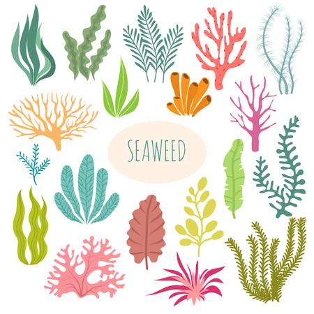 Algas. Plantas de acuario, plantación submarina. Vector silueta de algas marinas aislado conjunto. Ilustración de planta acuática, naturaleza fauna