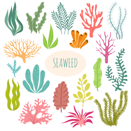 Seaweeds. Aquarium plants, underwater planting. Vector seaweed silhouette isolated set. Illustration of aquatic plant, nature wildlife  イラスト・ベクター素材