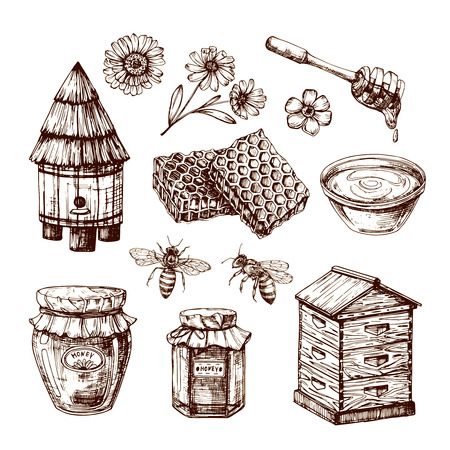 Honey sketch. Bee and honeyed flower, honeycomb and hive. Hand drawn vintage vector isolated set. Honeycomb and honey sketch, bee and flower illustration Banque d'images - 111801463