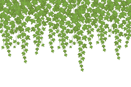Kletterpflanze der grünen Efeuwand, die von oben hängt. Gartendekoration Vektor Hintergrund