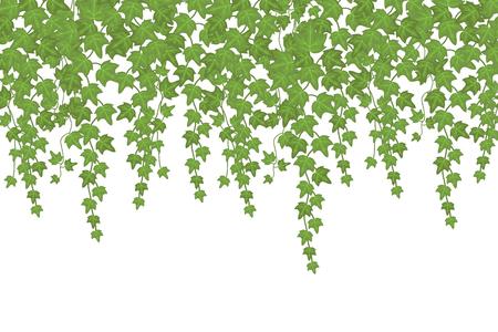 Zielona ściana pnąca bluszcz zwisająca z góry. Tło wektor dekoracji ogrodu