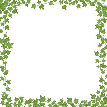 Bluszcz winorośli o zielonych liściach. Kwiatowy wektor prostokątna rama na białym tle