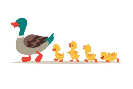 Madre pato y patitos. Lindos patos bebé caminando en fila. Ilustración vectorial de dibujos animados. Pato madre animal y familia patito.