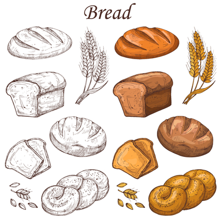 Line and colored bakery vector elements. Loaf of breads isolated on white background Vetores