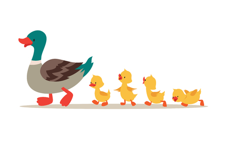 Mother duck and ducklings. Cute baby ducks walking in row. Cartoon vector illustration Stock Photo