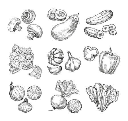 Légumes dessinés à la main. Chou-fleur de jardin, poivron et aubergine, champignons. Produits végétaliens frais. Ensemble isolé de vecteur végétal de croquis. Illustration de champignon et concombre, chou et champignon