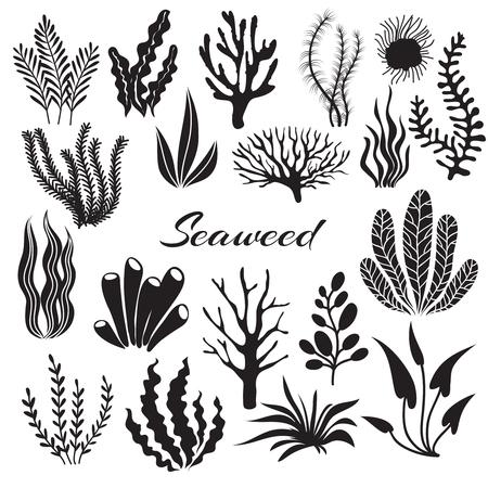 Aquarium seaweeds. Underwater plants, ocean planting. Vector seaweed black silhouette isolated set. Sea weed black, underwater sea ocean plant illustration