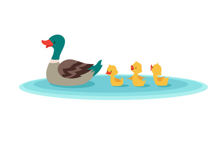 Mother duck and little ducks in water. Ducklings swimming in row. Cartoon vector illustration. Duckling bird animal on landscape water pond