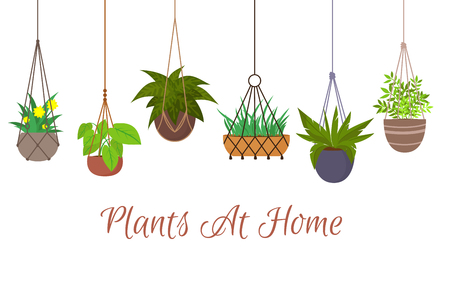 Indoor green plants in pots hanging on decorative macrame hangers vector set. Hanging plant in pot, decoration home illustration