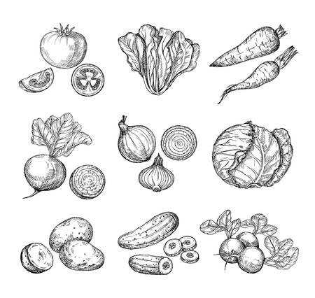 Sketch vegetables. Fresh tomato, cucumber and carrots, potatoes. Hand drawn onions, radish and cabbage. Garden vegetable vector set of tomato and potato, organic fresh food illustration Vetores