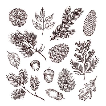Naszkicuj gałęzie jodły. Żołędzie i szyszki. Boże Narodzenie, zima i jesień elementy lasu. Ręcznie rysowane vintage wektor zestaw na białym tle. Ilustracja dekoracji natury, rysunek jodły