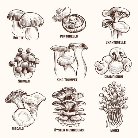 Sketch mushrooms. Autumn edible mushroom healthy food vintage engraved vector illustration. Mushroom edible, healthy food collection