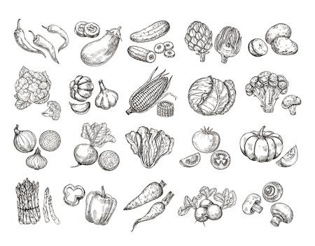 Bosquejo de verduras. Colección de vegetales de jardín dibujados a mano vintage. Zanahorias, brócoli, ensalada de patatas, cultivo de hongos, conjunto de vectores. Ensalada y zanahoria, dibujo ilustración de setas