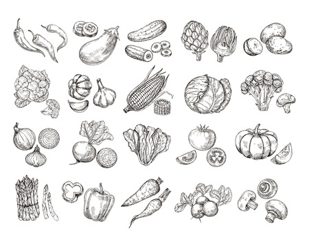 Sketch vegetables. Vintage hand drawn garden vegetable collection. Carrots broccoli potato salad mushroom farming vector set. Salad and carrot, sketch mushroom illustration