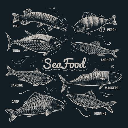 Croquis de poissons de fruits de mer. Hareng, truite, plie, carpe, thon, sprat collection de vecteur de poisson contour dessiné à la main dans un style vintage. Bannière de menu de poisson de mer, illustration de hareng et carpe, sardine et anchois