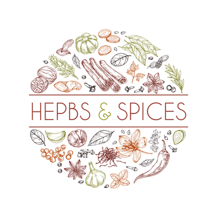 Herbs and spices background. Hand drawn asian food. Indian cooking herbs vector engraved style. Rosemary and cardamom, ginger and cinnamon illustration