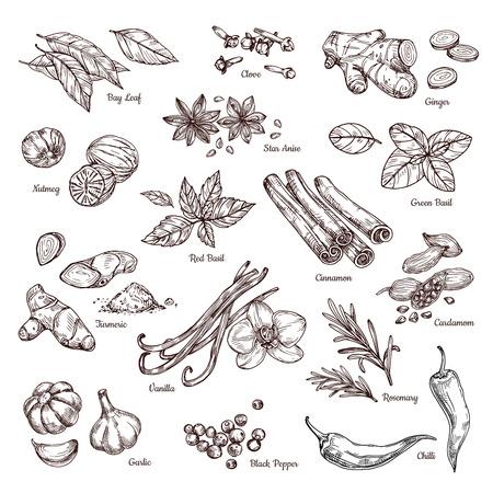 Handgezeichnete Gewürze. Vanille und Pfeffer, Zimt und Knoblauch. Skizzieren Sie Küchenkräuter isolierten Vektorsatz. Illustration der Zutat Kraut, Knoblauch und Gewürz zum Kochen Vektorgrafik