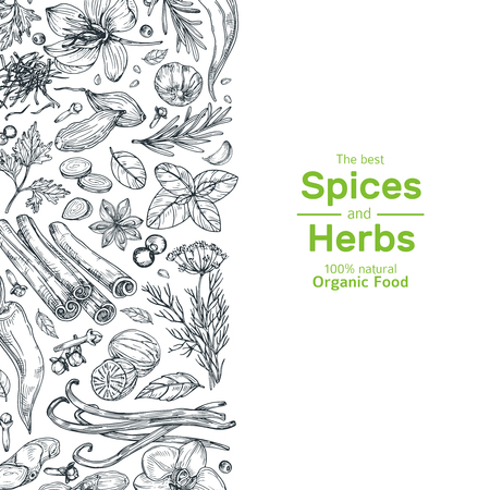Hand drawn herbs and spices background. Vintage organic indian kitchen and asian spices vector cooking concept. Ingredient for cooking, spice and herb, rosemary and cardamom illustration Ilustracja