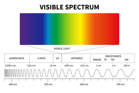 Diagramma luce visibile. Spettro elettromagnetico a colori, frequenza delle onde luminose. Priorità bassa di vettore di fisica della scuola educativa. Illustrazione del diagramma dello spettro arcobaleno, infrarosso ed elettromagnetico