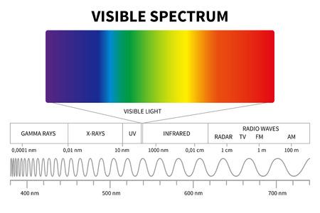 Diagramm des sichtbaren Lichts. Farbe elektromagnetisches Spektrum, Lichtwellenfrequenz. Pädagogische Schule Physik Vektor Hintergrund. Abbildung des Spektrumdiagramms Regenbogen, Infrarot und elektromagnetisch Standard-Bild