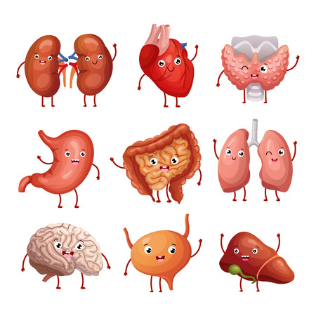 Cute cartoon human organs. Stomach, lungs and kidneys, brain and heart, liver. Funny inner organs vector anatomy characters brain and heart, liver and internal organ illustration Vectores