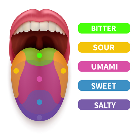 Realistic tongue with basic taste areas. Tasting map in human mouth vector illustration. Umami and salty, bitter and sour