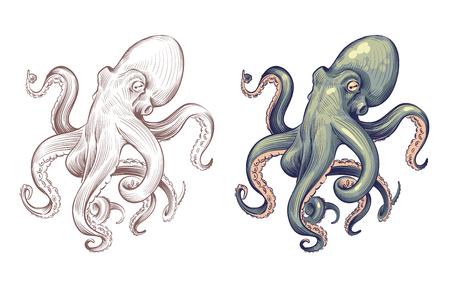 Polpo. Calamaro animale di mare dei frutti di mare con il fumetto di tentacoli e lo stile disegnato a mano Set vettoriale di polpi di calamari e polpi, illustrazione di animali oceanici Vettoriali