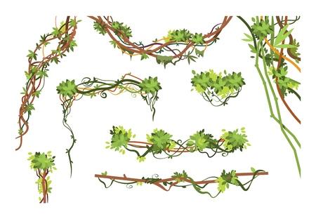 Gałęzie winorośli dżungli. Kreskówka wiszące rośliny liany. Dżungla wspinaczkowa kolekcja wektor zielonych roślin. Ilustracja rośliny gałęzi liany, zwisająca flora liści