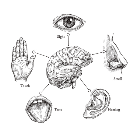 Five human senses. Sketch mouth and eye, nose and ear, hand and brain. Doodle body part vector set. Illustration of human organ, nose and ear, eye and mouth Vettoriali