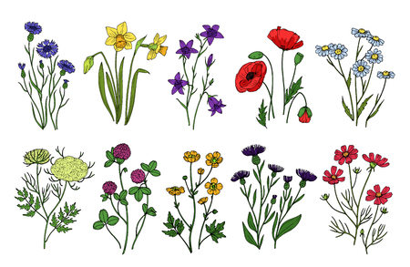 Wild herbs and flowers. Wildflowers, meadow plants. Hand drawn summer and spring field flowering. Vintage vector isolated set. Illustration of flower blossom, floral spring, field and wild flowers Vettoriali