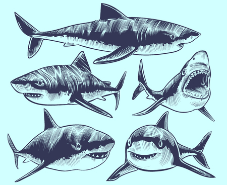 Sketch shark. Swimming sharks with open mouth. Underwater animal vector tattoo collection. Illustration of shark animal, dangerous predator marine