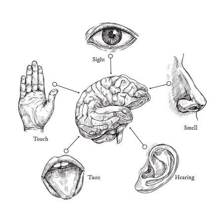Cinco sentidos humanos. Dibuje la boca y los ojos, la nariz y el oído, la mano y el cerebro. Doodle conjunto de vectores de parte del cuerpo. Ilustración de órganos humanos, nariz y oído, ojos y boca