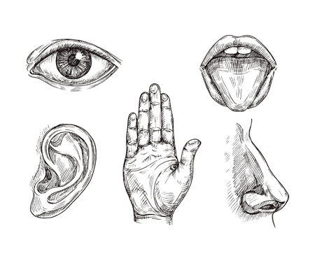 Sense organs. Hand drawn mouth and tongue, eye, nose, ear and hand palm. Engraving five senses vector illustration. Hear and sense, taste and see, listening sensor