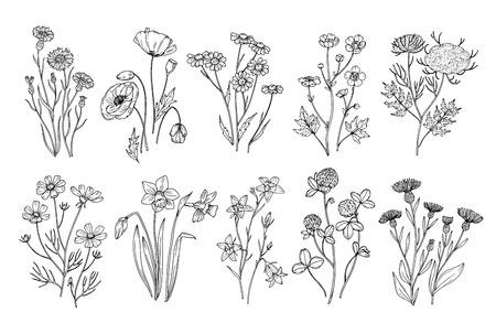 Wilde Blumen. Skizzieren Sie botanische Elemente der Wildblumen- und Kräuternatur. Hand gezeichneter blühender Vektorsatz des Sommerfeldes. Illustration des Blumenfeldes, weiße schwarze Linie der wilden Blume