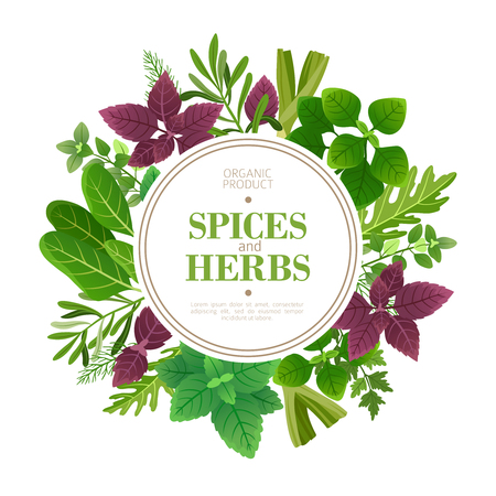 Spices and herbs background. Fresh herb cooking aromatic plants. Indian food vector frame. Culinary and cooking, plant dill and sage illustration