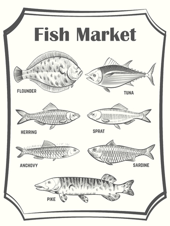 Hand sketched different fish vector poster template. Fish Market banner. Illustration of seafood market, fish for cooking