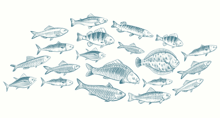 Hand sketched fish vector illustration. Underwater life banner for restaurant menu. Underwater seafood, ocean food sketch 版權商用圖片 - 125198007