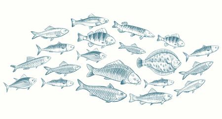 Hand sketched fish vector illustration. Underwater life banner for restaurant menu. Underwater seafood, ocean food sketch
