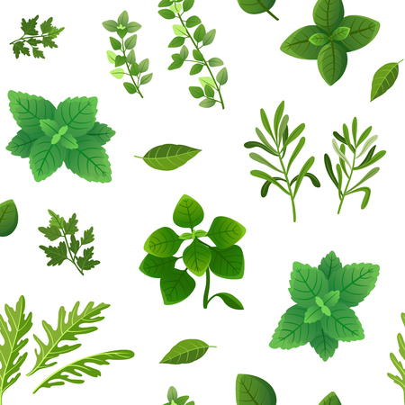 Spice seamless pattern. Food herbs and spices oregano green basil mint spinach coriander parsley dill and thyme. Vector endless texture spice for cooking, ingredient herbal and basil illustration Çizim