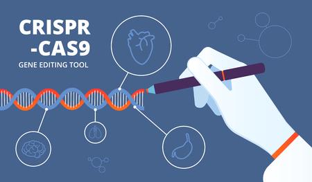 Crispr-Konzept. Cas9-DNA und Gentechnik-Biotechnologie. Medizinischer Vektorhintergrund der Modifikation des menschlichen Genoms. Illustration der DNA-Biotechnologie, Gen Crispr-Cas9