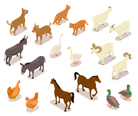 Farm animals isometric. Horse and dog, cat and goose, chicken and goat, ram and duck, donkey. Domestic animals vector 3d set isolated. Illustration of isometric animal farm, sheep and goat Фото со стока - 120616919