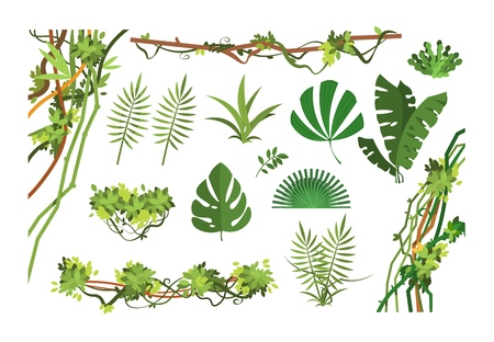 Jungle vine. Cartoon rainforest leaves and liana overgrown plants. Isolated vector set of exotic jungle plant, palm leaf and green branch illustration Vetores