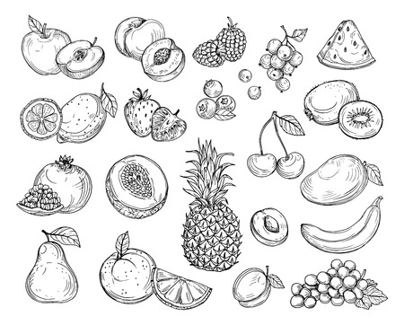 Dibujar frutas. Melón fresa, mango melocotón. Plátano, piña, uvas frambuesa dibujado a mano conjunto de vectores de bayas de frutas. Ilustración de melón y plátano, cereza y limón. Ilustración de vector