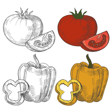 Black and white and color sketch tomatoes and sweet pepper isolated on white background. Illustration of tomato food and pepper