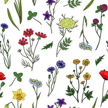 Wild flowers seamless pattern. Floral wildflower vintage wallpaper. Summer, spring botanical textile vector texture. Illustration of floral spring, summer texture flowers