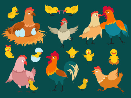 Cute cartoon characters chicken vector of set. Cartoon cute farm bird, rooster and chicken illustration  イラスト・ベクター素材