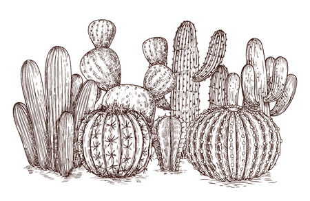 Hand drawn cactus. Western desert cacti mexican plants in sketch style vector illustration. Cactus mexican sketch, succulent plant sketched composition