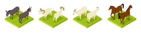 Isometric hoofed cattle. Dunkey, horse, ram and goat 3d vector collection. Illustration of cattle animals, horse and donkey 向量圖像